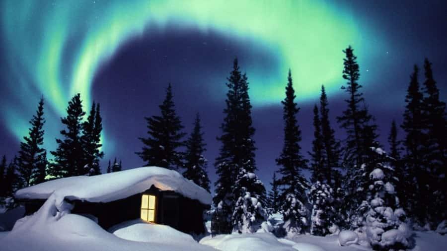 Boreal Ormanı Kuzey Kanada