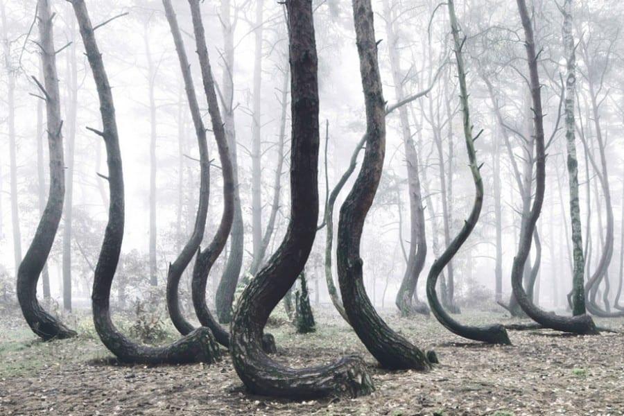 Crooked Ormanı Polonya
