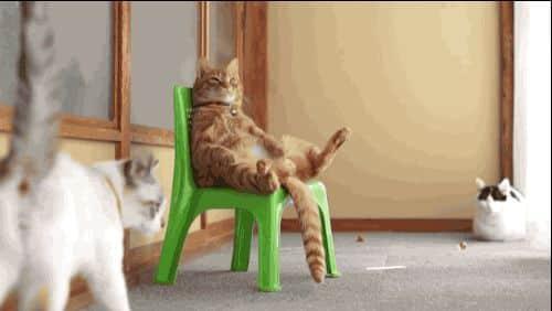 Mekan Sahibi Kedi