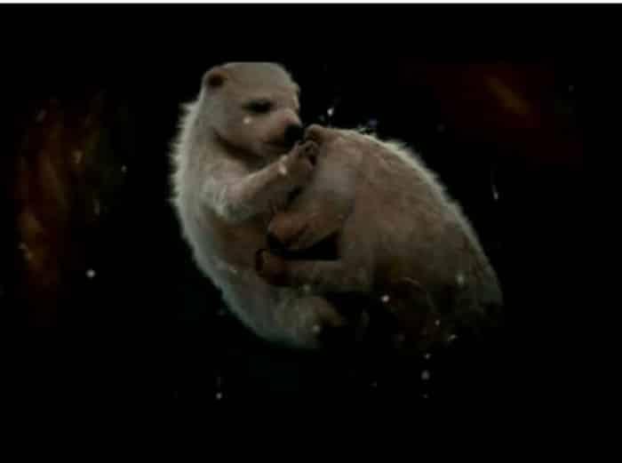 Anne KArnında Kutup Ayısı