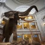 Smithsonian Doğa Tarihi Müzesinden En İlginç Görüntüler