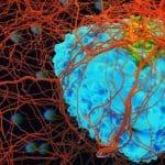 Öcü Değil Ama Öldürücü: Kanserden Korunmak İçin Gıda Sağlığına Nasıl Dikkat Etmeliyiz?