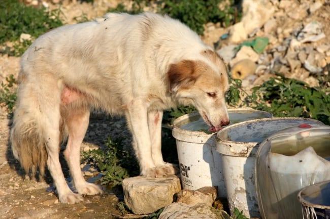 Sokak Hayvanları: Nasıl Önlemler Alınmalı?