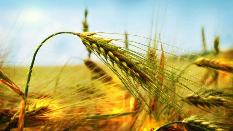 Milyarlarca İnsan İçin Gıda Üretimi Nasıl Yeterli Oluyor?