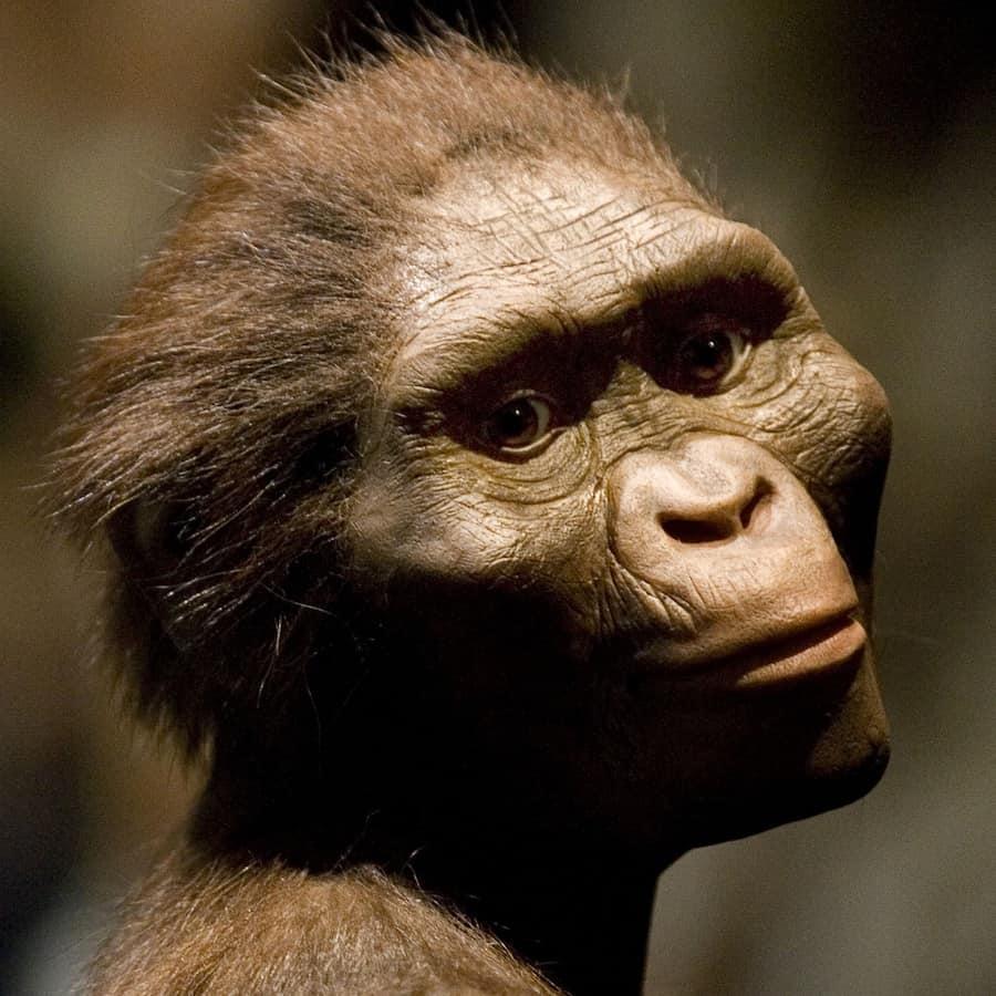 İnsanlar Kendilerini 600.000 Yıl Önce Evcilleştirmeye Başlamışlar