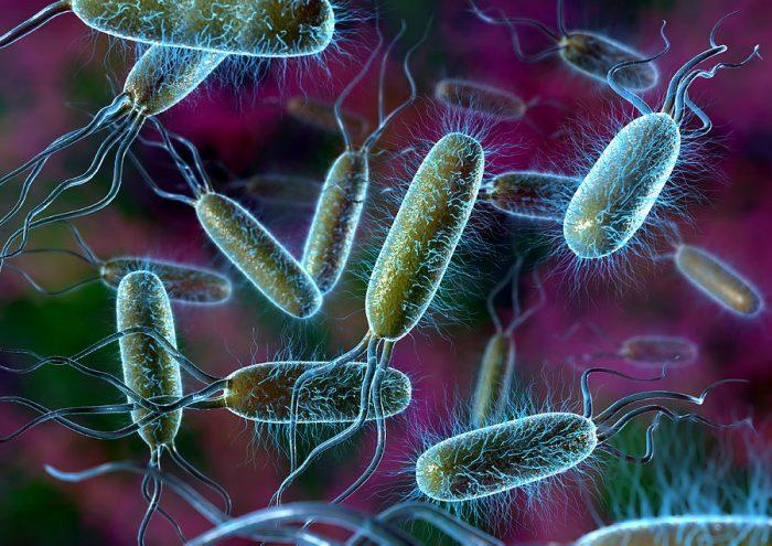 Bakteri Nedir, Özellikleri Nelerdir?