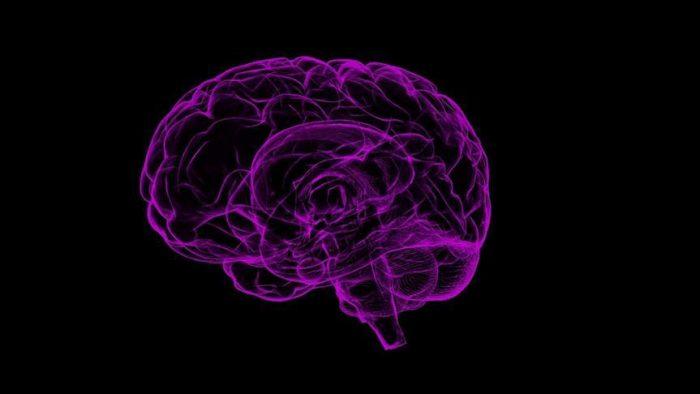 Amigdala Nedir?