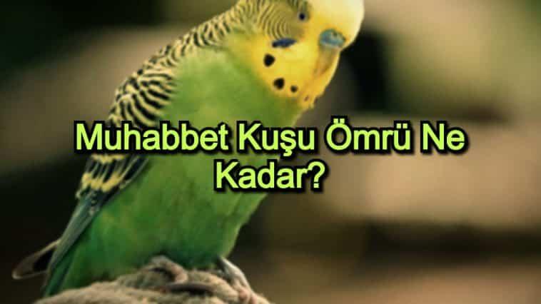 Muhabbet Kuşu Ömrü Ne Kadar?