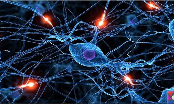Nörotransmitter Nedir?